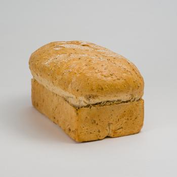 Panigraines brood